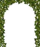 Murgrönabåge Royaltyfri Bild