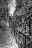 Murgrönabana Arkivbild