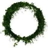 Murgrönacirkel eller cirkellövverk stock illustrationer