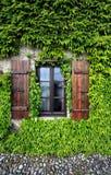 murgrönafönster Arkivbilder