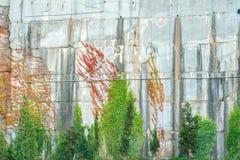 Murgrönan klamra sig fast intill den härliga bakgrunden för betongväggen royaltyfri fotografi