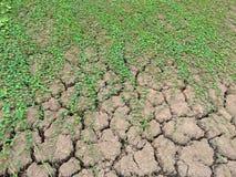Murgrönan på jordning Royaltyfria Bilder