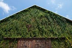 murgrönan på väggen arkivbilder