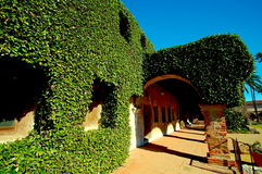 Murgrönan täckte gångbanan gör tecken åt det äventyrligt Arkivbilder