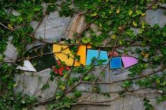 Murgrönan växer på den gamla väggen Fotografering för Bildbyråer
