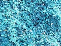 Murgrönasidor täcker träden, med mörkare skuggor av varierande färger Royaltyfri Foto