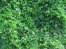 Murgrönasidor täcker träden, med mörkare skuggor av varierande färger Royaltyfria Bilder