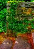 murgrönasten Royaltyfria Foton