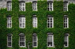 Murgrönatillväxt på byggnad Royaltyfri Foto