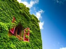 Murgröna och fönster Royaltyfria Foton
