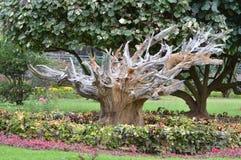 Murió el árbol en el parque Imagen de archivo libre de regalías