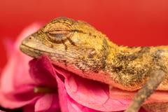 Murió el lagarto oriental del jardín Foto de archivo