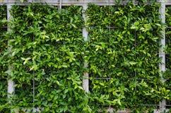 Muri la foglia verde sulla struttura d'acciaio con rete Immagini Stock Libere da Diritti