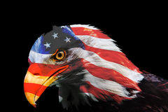 Murica eagle Stock Photography