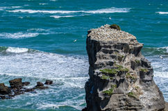 Muriwai地方公园,新西兰 免版税库存照片