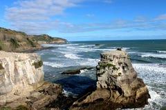 Muriwai beach. The largest gannet habitat near Auckland,  wonderful vacation spot for Kiwi Royalty Free Stock Photography