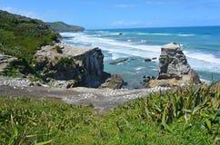 Muriwai gannet殖民地-新西兰 免版税图库摄影
