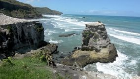 Muriwai gannet colony - New Zealand stock video footage