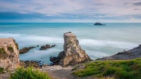 Muriwai Gannet kolonia Zdjęcie Royalty Free
