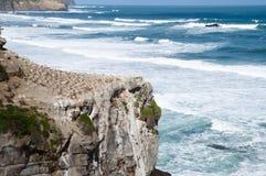 Muriwai wybrzeże Auckland, Nowa Zelandia - Obraz Royalty Free