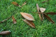 Murkna sidor på gräs i parkera Royaltyfri Foto