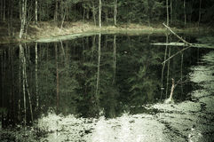 Murky autumn forest and lake, reflection in water. Vintage effect Stock Photography