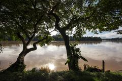 Silhouette of trees by a river band stock image