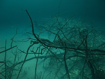 Murky Waters Royalty Free Stock Photo