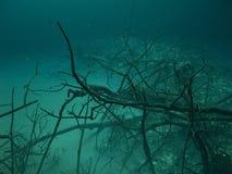 Murky Waters. Diving Cenotes in Rivera Maya Royalty Free Stock Photo