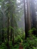 Murmúrios da floresta fotografia de stock