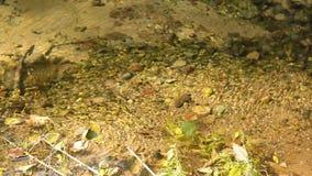 Murmur of the lake stock footage