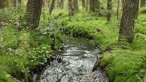 Free Murmur Of Water In A Creek Royalty Free Stock Photo - 100959965