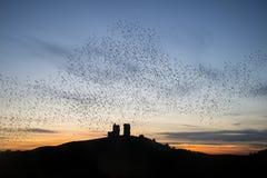Murmuration de estorninos sobre ruinas del castillo del cuento de hadas en la puesta del sol l Imagen de archivo