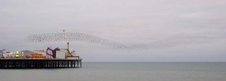 Murmuration des étourneaux au-dessus du pilier de palais, Brighton, le Sussex, R-U Photographié une soirée froide en décembre image stock