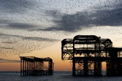 Murmuration over the ruins of Brighton`s West Pier in England. Stock Image