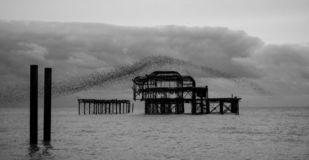 Murmuration of starlings over the remains of West Pier, Brighton UK. Photographed at dusk, in monochrome. royalty free stock photo