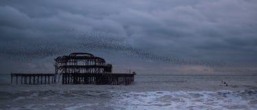 Murmuration van starlings over de overblijfselen van het Westenpijler, Brighton het UK Gefotografeerd bij schemer royalty-vrije stock foto's