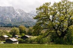 Murnau客舱春天雪绿色 图库摄影