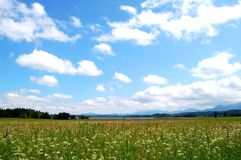 Murnauer Moor with cloudy Sky, Bavaria, Germany. White clouds dominating the image within blue sky. In the front is a meadow with classical moor greenery and Stock Photography