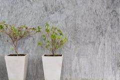 Muro de cemento con el árbol fotografía de archivo libre de regalías