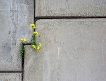 Muro de cemento con la flor Imágenes de archivo libres de regalías