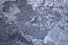 Muro de cemento con las piedras en él Foto de archivo