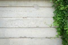 Muro de cemento con las plantas ornamentales Imagen de archivo libre de regalías