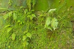 Muro de cemento cubierto de musgo Fotografía de archivo libre de regalías