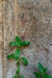 Muro de cemento viejo Imagenes de archivo