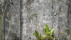 Muro de cimento Imagem de Stock