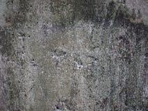 Muro de cimento velho com líquene seco imagem de stock royalty free