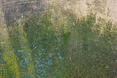 Muro de cimento velho da textura mofado úmida Foto de Stock Royalty Free