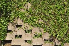 Muro de contención con la hiedra fotografía de archivo libre de regalías