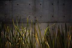 Muro di cemento con le piante Immagini Stock Libere da Diritti